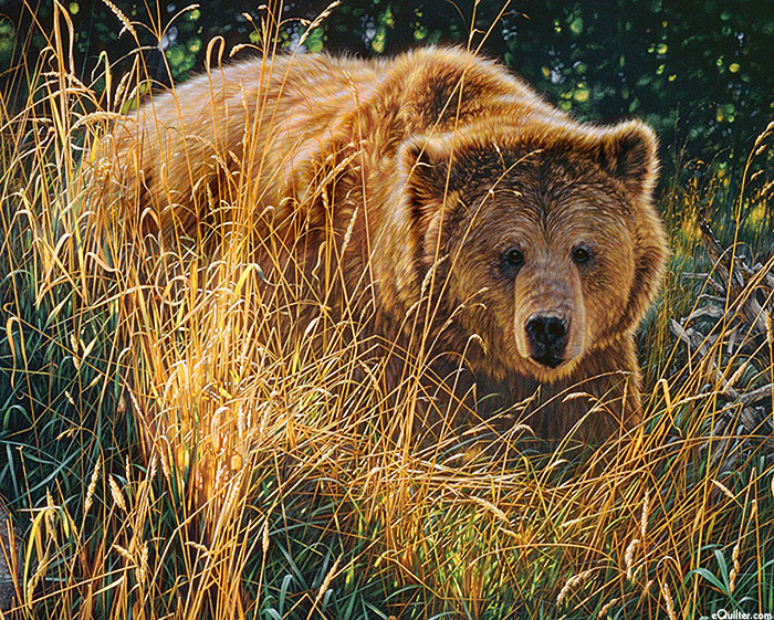 """Past & Present - Grizzly Crossing Paths - 36"""" x 44"""" PANEL"""
