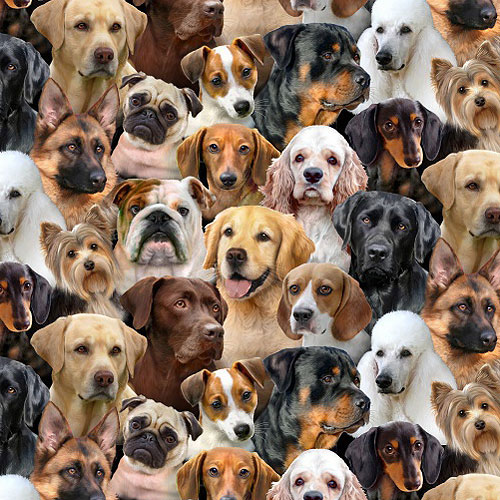 Dog Breeds - Packed Dogs - Multi