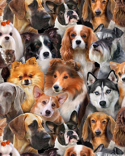 Dog Breeds - Canine Convention - Espresso Brown