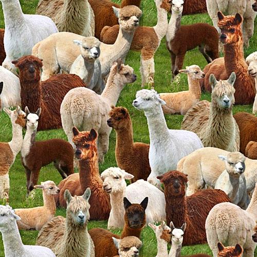 Farm Animals - Alpacas Galore - Grass Green