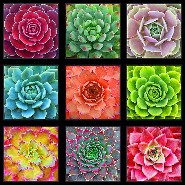 "Succulent Charm - Desert Bloom - 24"" x 44"" PANEL - DIGITAL PRINT"