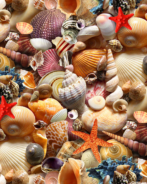 Children of the Sea 2 - Tropical Shells - Coral