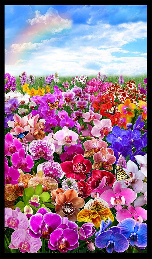 "Orchid Magic - Rainbow Meadow - 23"" x 44"" PANEL - DIGITAL PRINT"