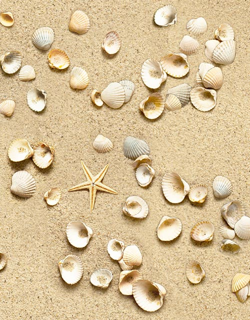 Paradise Found - Seashell Beach - Sandy Beige