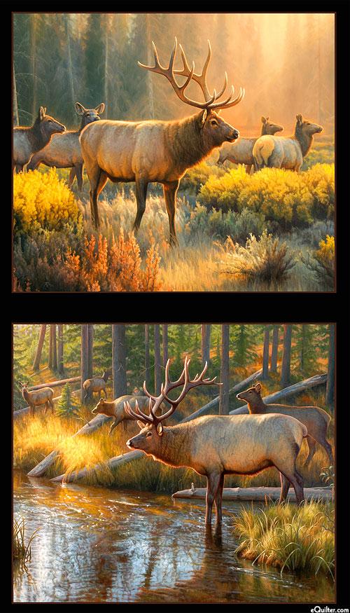 "Morning Glory - Elk in the Sunlight - 24"" x 44"" PANEL - DIGITAL"