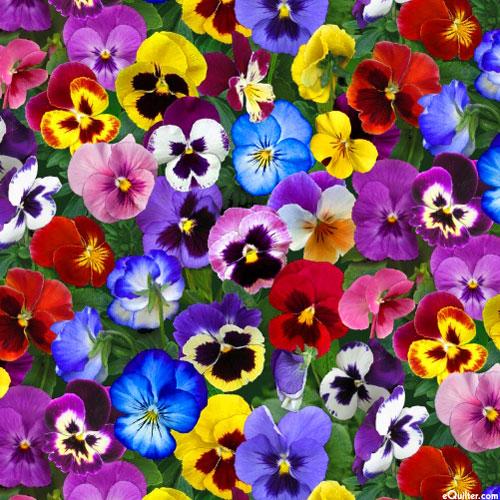 Lovely Pansies - Flower Bed Gems - Multi