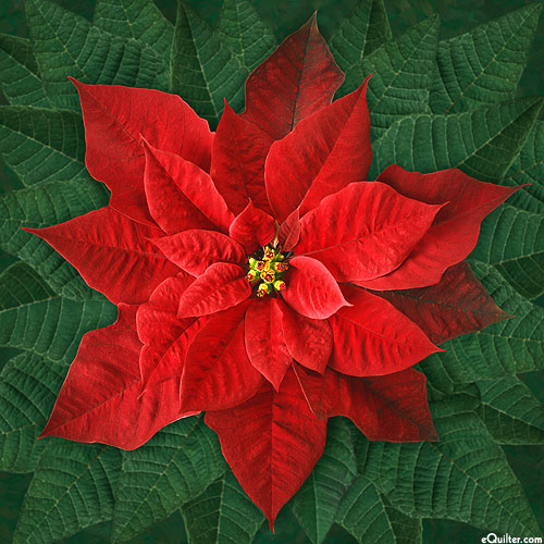 """Dream Big Holiday - Poinsettias - Ruby Red - 43"""" x 44"""" PANEL"""