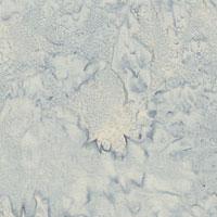 HOHND176