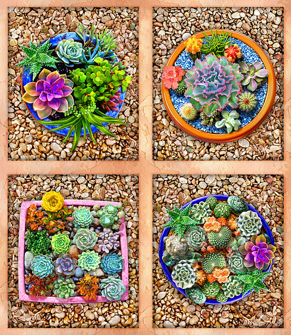 """The Potted Garden - Cactus Creations - Sand - 24"""" x 44"""" PANEL"""