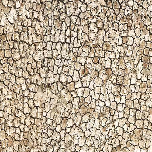 Naturescapes - Dried Lakebed - Natural