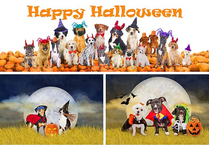 "Halloween Pups - Orange/Multi - 29"" x 44"" PANEL - DIGITAL PRINT"