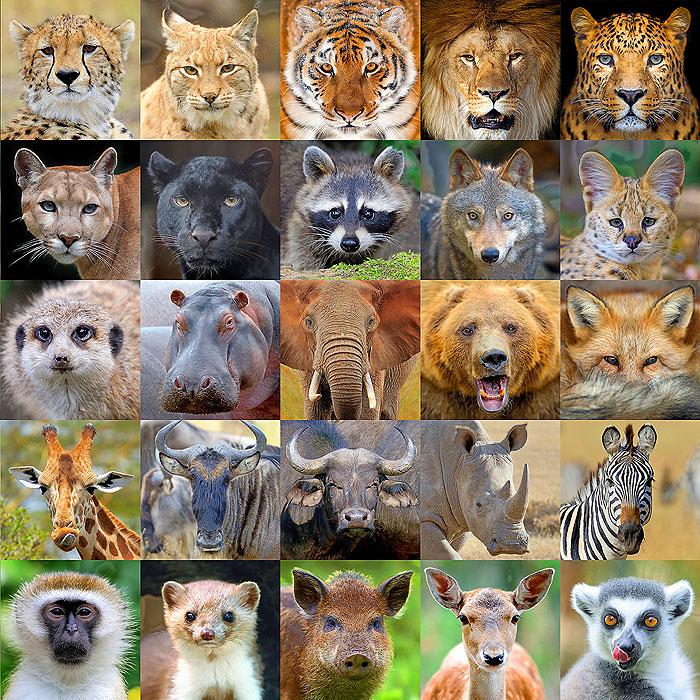 "Wild Animal Portraits - 43"" x 44"" PANEL - DIGITAL PRINT"