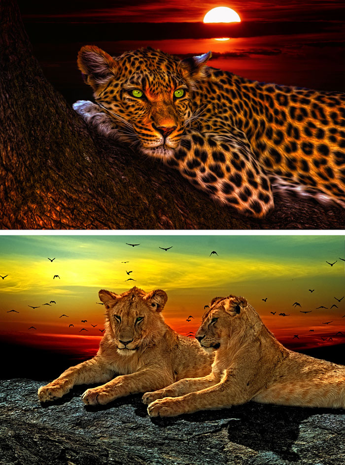 "Serengeti Sunset 2 - Leopard & Lions - 32"" x 44"" PANEL - DIGITAL"