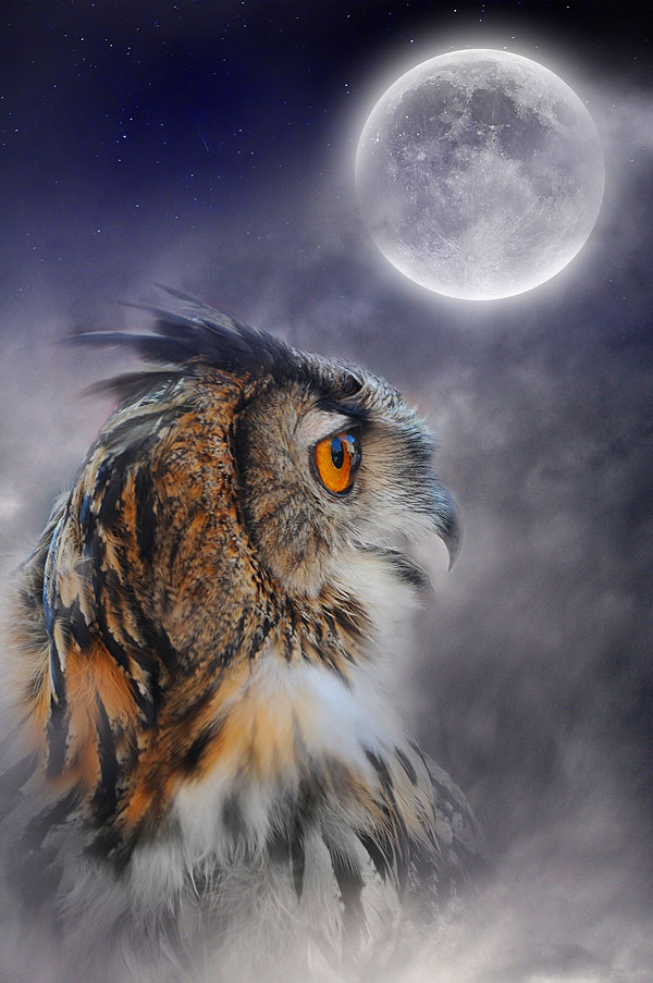 "Full Moon & Owl - Purple Mist - 29"" x 44"" PANEL - DIGITAL PRINT"