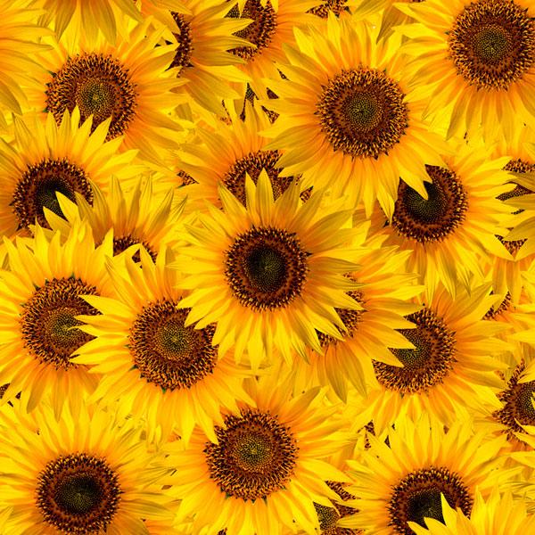 Sunflower Garden - Harvest Yellow - DIGITAL PRINT