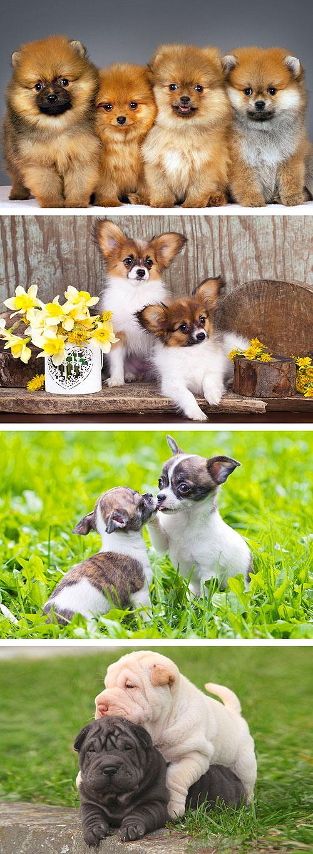 "Perfect Puppies 3 - 29"" x 44"" PANEL - DIGITAL PRINT"