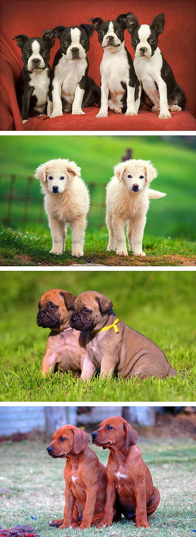 "Perfect Puppies 4 - 29"" x 44"" PANEL - DIGITAL PRINT"