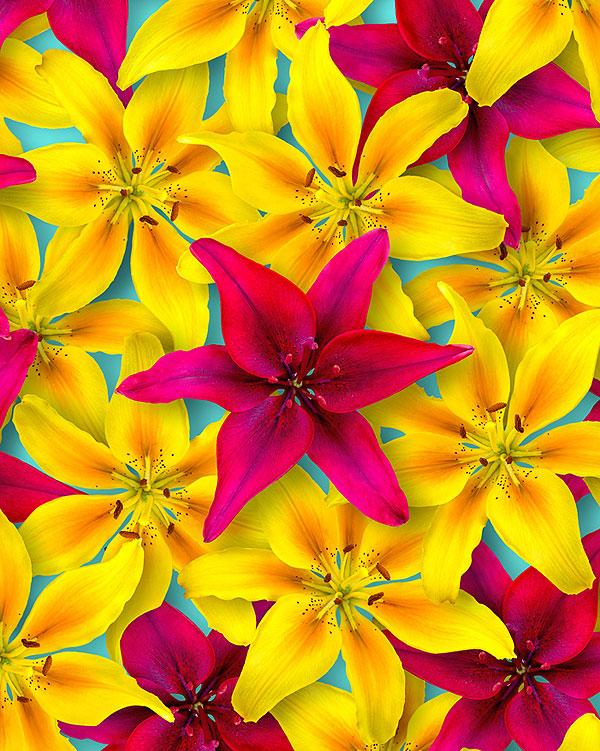 Spring Lilies - Azure - DIGITAL PRINT