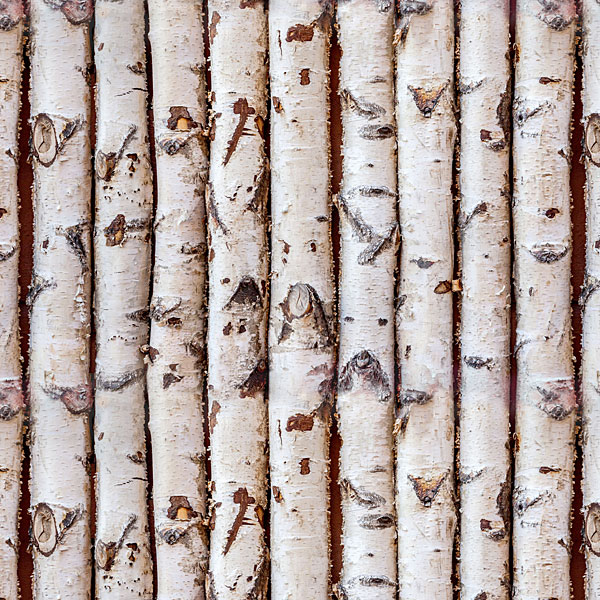 Birch Trees - Trimmed Trunks - Ivory - DIGITAL PRINT