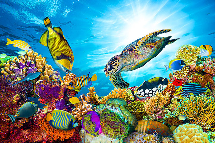 "Colorful Coral Reef - 29"" x 44"" PANEL - DIGITAL PRINT"