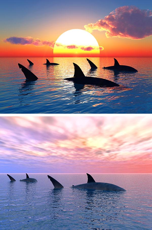 "Sharks at Sunset - 28"" x 44"" PANEL - DIGITAL PRINT"