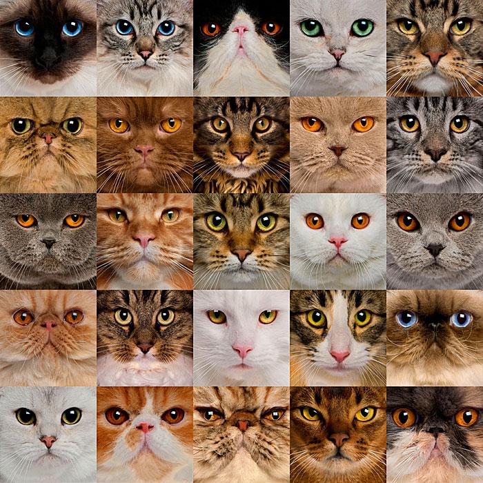 Cat Eye Close-Ups - Natural - DIGITAL PRINT