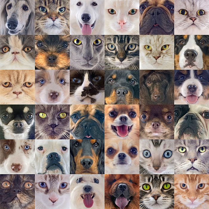 Cat Eyes & Dog Nose Close-Ups - Taupe - DIGITAL PRINT