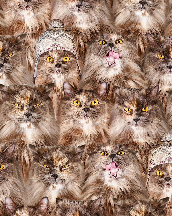 Fuzzy Kitty Faces - Cocoa Brown - DIGITAL PRINT
