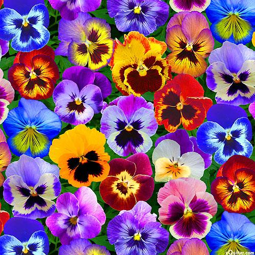 Perfect Pansies - Small Blooms - Multi - DIGITAL PRINT
