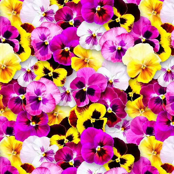 Summer Pansies - Fuchsia/Canary Yellow - DIGITAL PRINT