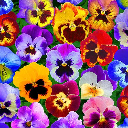 Perfect Pansies - Large Blooms - Multi - DIGITAL PRINT