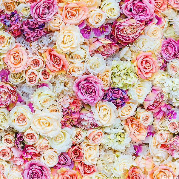 Rose Garden - Wedding Roses - Blush Pink - DIGITAL
