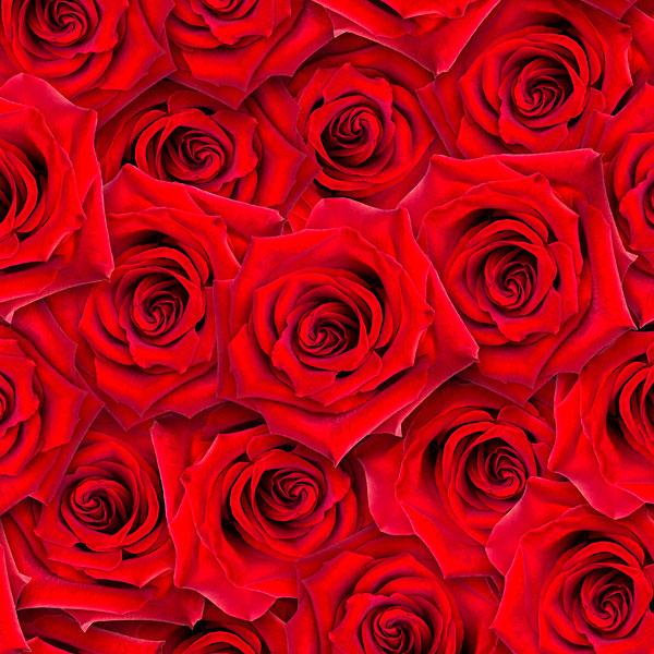 Roses - Romantic Blooms - Lipstick Red - DIGITAL PRINT