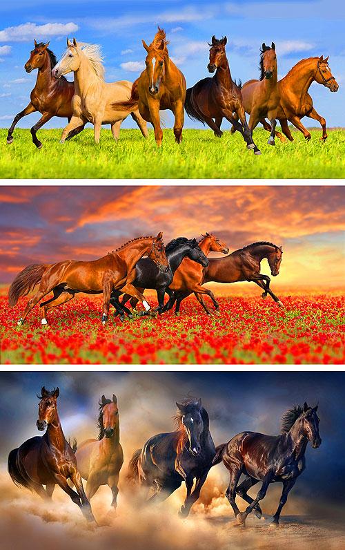 "Horses - Full Gallop - 27"" x 44"" PANEL - DIGITAL PRINT"