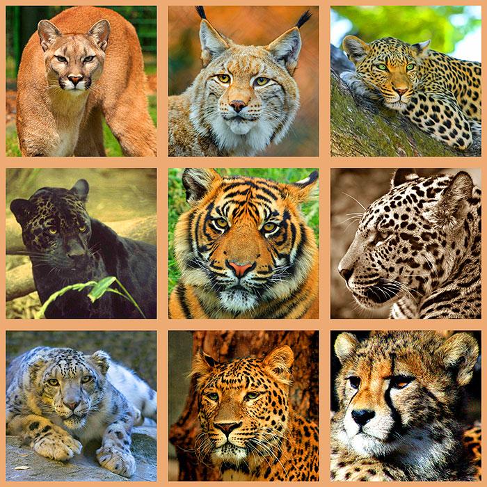 "World of Wild Cats - 42"" x 44"" PANEL - DIGITAL PRINT"