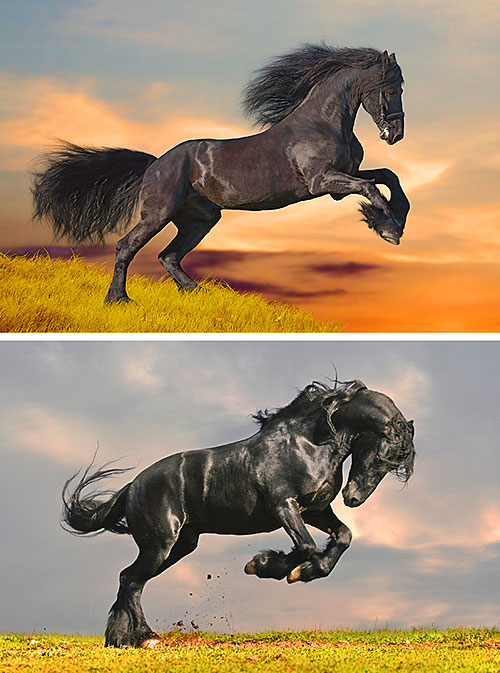 "Friesian Horses - Freedom - 32"" x 44"" PANEL - DIGITAL PRINT"
