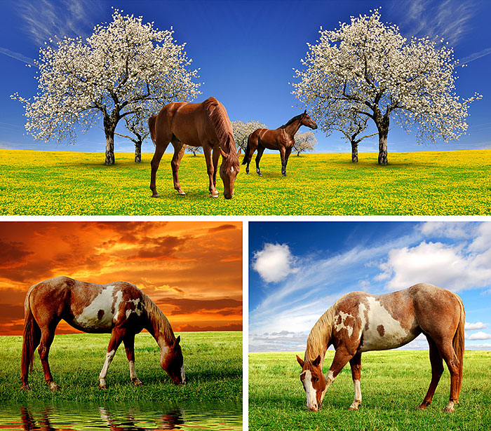 "Horses in the Meadow - 38"" x 44"" PANEL - DIGITAL PRINT"