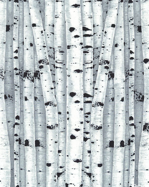 Birch Song - Dense Trees - Ash Gray
