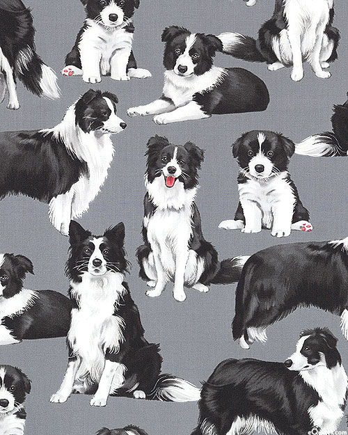 Just Border Collies - Pewter Gray